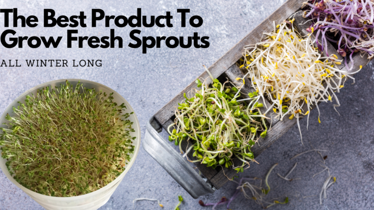 The #1 Best Sprout Maker To Grow Fresh Sprouts All Winter Long