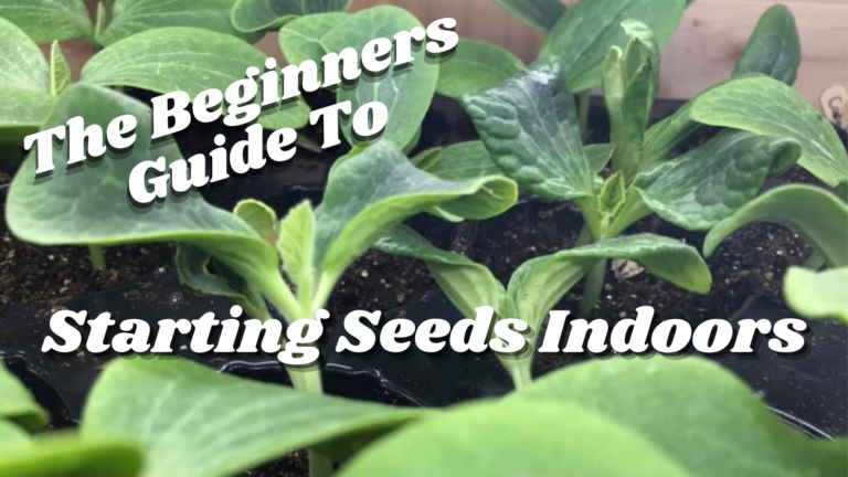 The Beginners Guide To Starting Seeds Indoors in 2021