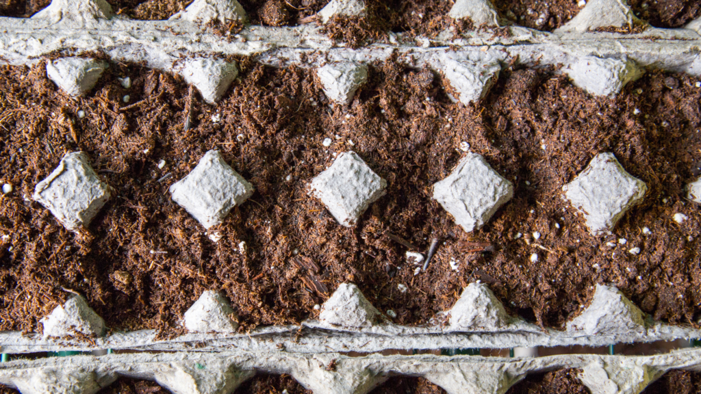 Can you use egg cartons to start seeds?